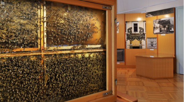 The observation hive where you can watch the industrious bees hard at work