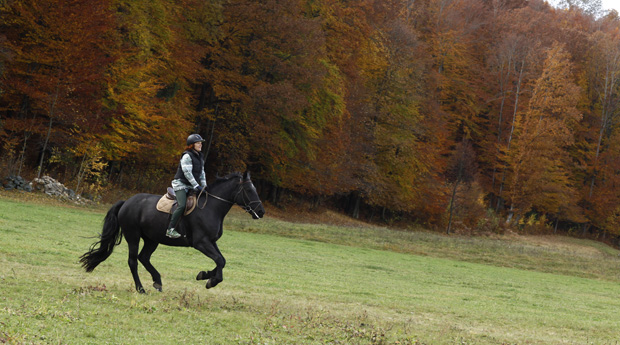 Horseriding for more experienced riders